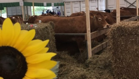 foire agricole de Ettelbruck